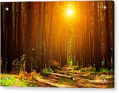 Forest Landscape Acrylic Print
