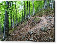 Forest On Balkan Mountain, Bulgaria Acrylic Print