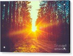 Forest Road Under Sunset Sunbeams. Lane Acrylic Print