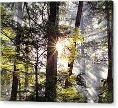 Forest Sunrise Acrylic Print by Leland D Howard