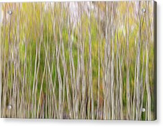 Acrylic Print featuring the photograph Forest Twist And Turns In Motion by James BO Insogna