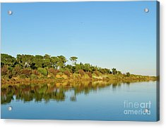 Forests Mirror Acrylic Print