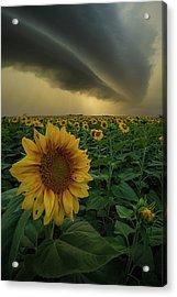 Acrylic Print featuring the photograph Frailty  by Aaron J Groen