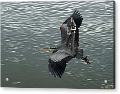 Acrylic Print featuring the photograph Free Birds In Flight by Ben Upham
