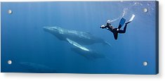 Freediving Acrylic Print by By Wildestanimal