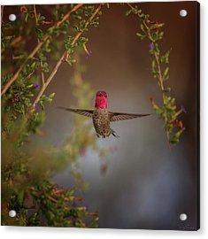 Freeze Frame Acrylic Print