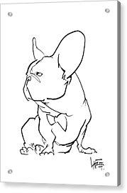 French Bulldog Gesture Sketch Acrylic Print