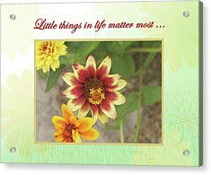 Friendship, A Smiling Indian Blanket Flower  Acrylic Print