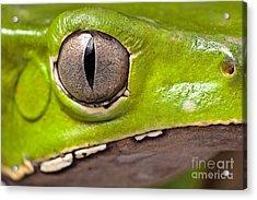 Frog Eye Amphibian Vertical Pupil Acrylic Print