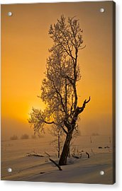 Frosted Tree Acrylic Print
