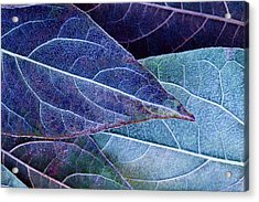 Frosty Leaves Acrylic Print by Ithinksky