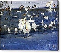 Frozen Lake. Acrylic Print