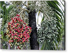 Fruity Palm Tree  Acrylic Print