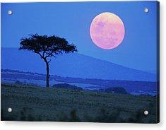 Full Moon Rising Above Tree, Savanna Acrylic Print by Paul Souders