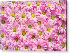 Full Of Pink Flowers Acrylic Print