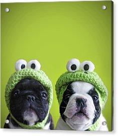Funny Dogs Acrylic Print