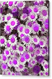 Fuscia Girls Acrylic Print
