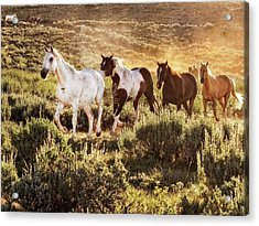 Galloping Down The Mountain Acrylic Print