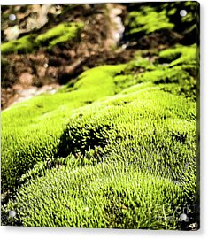 Acrylic Print featuring the photograph Tiny Forest 1 by Atousa Raissyan