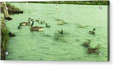 Ghost Ducks Acrylic Print