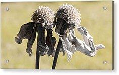 Ghost Sisters Acrylic Print