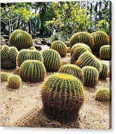 Giant Cactus In Garden, Thailand Acrylic Print