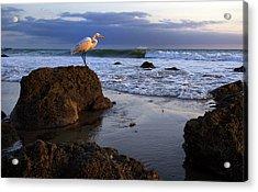 Giant Egret Acrylic Print