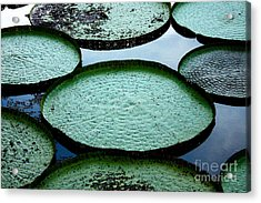 Giant Lily Pads In The Amazon Acrylic Print