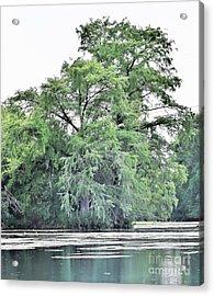 Giant River Tree Acrylic Print