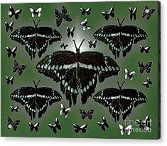 Giant Swallowtail Butterflies Acrylic Print