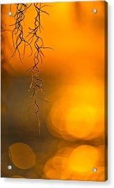 Gilded Moss Acrylic Print