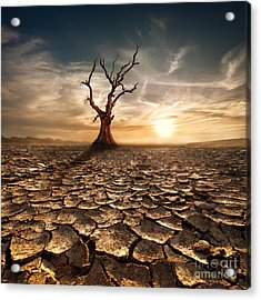 Global Warming Concept. Lonely Dead Acrylic Print