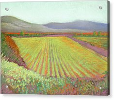Gloria Ferrer Winery Acrylic Print