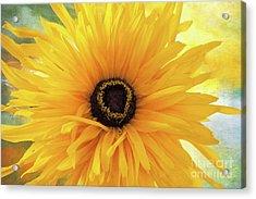 Acrylic Print featuring the photograph Gloriosa Daisy by Ann Jacobson