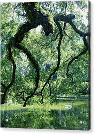 Gnarled Tree With Swan On Lake Acrylic Print