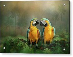 Acrylic Print featuring the photograph Gold And Blue Macaw Pair by Patti Deters