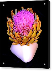 Gold And Pink Acrylic Print