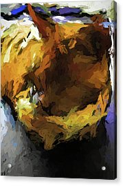 Gold Cat And The Shadow Acrylic Print
