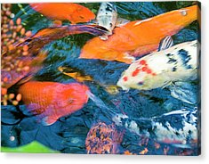 Gold Fish Acrylic Print by By Ken Ilio