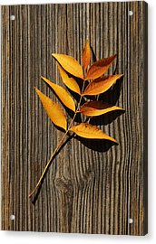Acrylic Print featuring the photograph Golden Autumn Leaves On Wood by Debi Dalio
