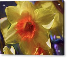 Acrylic Print featuring the mixed media Golden Daffodil Brilliance by Lynda Lehmann