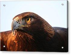 Golden Eagle 5151803 Acrylic Print