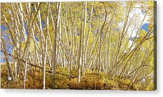 Acrylic Print featuring the photograph Golden Forest Fantasy by James BO Insogna