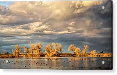 Golden Hour In The Refuge Acrylic Print