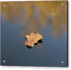 Golden Leaf On Water Acrylic Print