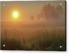 Golden Morning Acrylic Print
