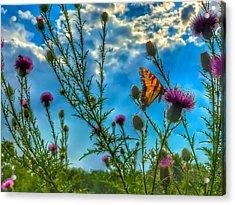 Golden Wings Acrylic Print
