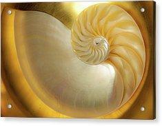 Golden_nautilus_0692 Acrylic Print