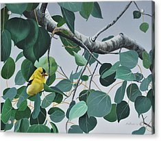 Acrylic Print featuring the painting Goldfinch And Aspen by Peter Mathios