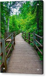Gooseberry River Trail Acrylic Print
